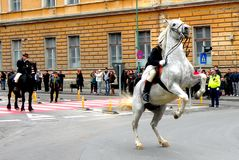 Potomstwa siedzieli na koniu w w centrum Brasov Fotografia Royalty Free