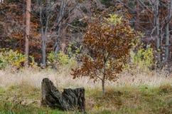 Potomstwa wysuszony drzewo zdjęcie royalty free