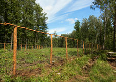 Potomstwa zasadzający w lesie Fotografia Royalty Free