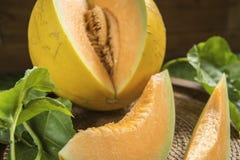 Potomstwo flanca Japo?scy melony lub kantalup?w melon?w ro?liny fotografia royalty free