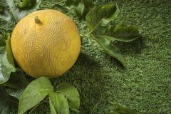 Potomstwo flanca Japo?scy melony lub kantalup?w melon?w ro?liny zdjęcie royalty free