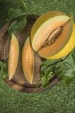 Potomstwo flanca Japo?scy melony lub kantalup?w melon?w ro?liny obrazy royalty free