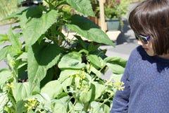 Potomstwo gruntujący uśmiechnięty dziecko patrzeje wyprodukowany lokalnie musztardy rośliny obrazy royalty free