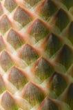 Potomstwo kwiatu kolec agawa Zdjęcie Royalty Free