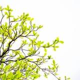 Potomstwo liści tło Zdjęcie Stock
