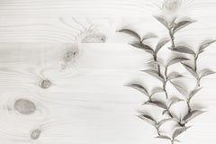 Potomstwo liście na drewnianym beżowym tle tła czarny karcianego projekta kwiatu fractal dobrego ogange plakatowy biel Drewna lek Obraz Stock