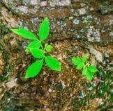 Potomstwo liście na drzewie zdjęcie royalty free