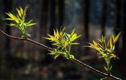 Potomstwo liście na drzewie zdjęcie stock