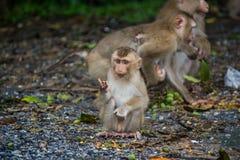Potomstwo małpa Zdjęcie Stock