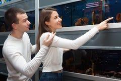 Potomstwo para ogląda tropikalnej ryba w petshop obrazy royalty free