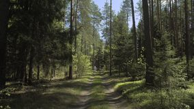 Potomstwo pary kolarstwo W naturze zbiory wideo
