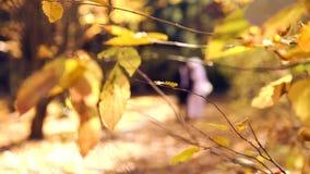 Potomstwo pary odprowadzenie w jesień parku na ich dniu ślubu