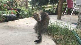 Potomstwo popielaty pasiasty kot siedzi w jardzie zbiory wideo