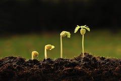 Potomstwo roślina fotografia royalty free
