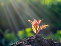 Potomstwo zieleni flanca r out od ziemi Nowy życie c i ekologia Fotografia Royalty Free