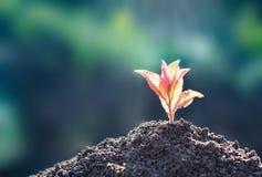 Potomstwo zieleni flanca r out od ziemi Nowy życie c i ekologia Fotografia Stock
