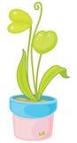 Potplant Stock Images