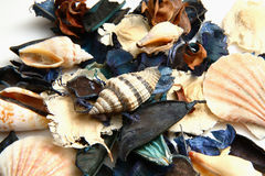 Potpourri. Close-up photo of colorful scented potpourri stock photography