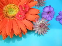 Potpourri. Photograph of several bright colored flowers against a bright blue background Stock Photography