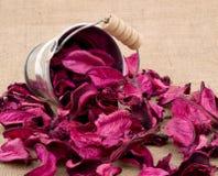 Potpourri cor-de-rosa Fotos de Stock Royalty Free