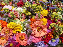 Potpourri of flowers. A huge bunch of mixed annual flowers. Every color in the spectrum is represented in this tightly packed tableau Stock Images