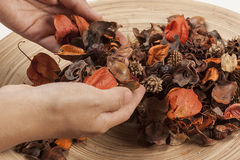Potpourri hold in hands Royalty Free Stock Photo