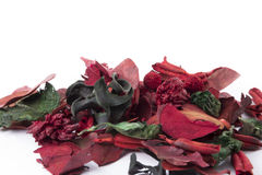 Potpourri nature. Winter dry red leaves Royalty Free Stock Image