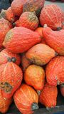 Potpourri of orange oktober pumpkins royalty free stock images