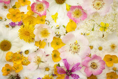 Potpourri of wild flowers. Background picture of an potpourri of wild flowers with wild roses, daisies and many others Royalty Free Stock Image