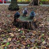 Potrójny ptak Zdjęcia Royalty Free