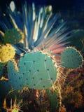 Potrącenie kaktus Fotografia Stock