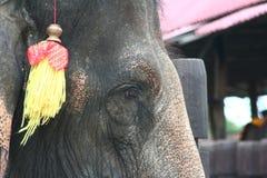Potrait слона Стоковое фото RF