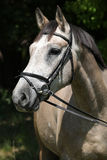 Potrait of beautiful horse with bridle Royalty Free Stock Photo