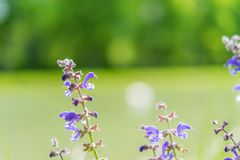 Potrait of beautiful purple plant with blurry background. At sunny day stock photos