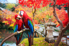 The potrait of Blue & Gold Macaw Royalty Free Stock Photos