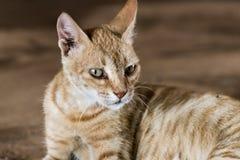 Potrait de chat mignon de Brown dehors photographie stock