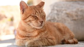 Potrait de um gato vídeos de arquivo