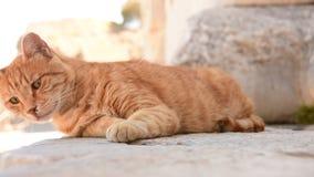 Potrait de um gato video estoque