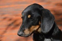 Potrait del perro abandonado Fotos de archivo