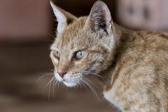 Potrait do gato bonito de Brown fora fotos de stock