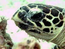 Potrait einer Schildkröte Stockfotografie