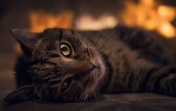 Potrait obdzierający kot kłaść na kanapie z pomarańczowymi światłami na backround Stary kot kłaść w zmroku z lampą z zdradzonym o zdjęcia stock