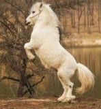 Potro blanco que se coloca en la tierra en un fondo de un bosque del otoño Imagen de archivo libre de regalías