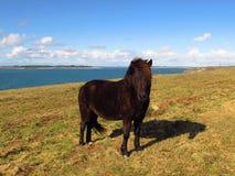 Potro del caballo en un campo por el mar Foto de archivo