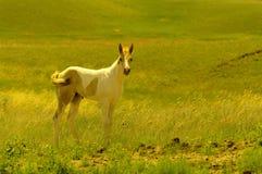 Potro e cavalos fotos de stock royalty free