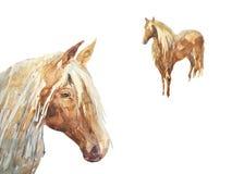 Potro en el prado stock de ilustración