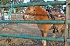 Potro en una granja de la corrección del pampkin Foto de archivo