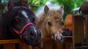 Potros hermosos en un parque zoológico de la jaula foto de archivo libre de regalías