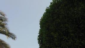 POTRZĄSALNY drzewo NALEŻNY powietrze zbiory wideo