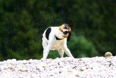 Potrząsalny doggy Zdjęcie Royalty Free